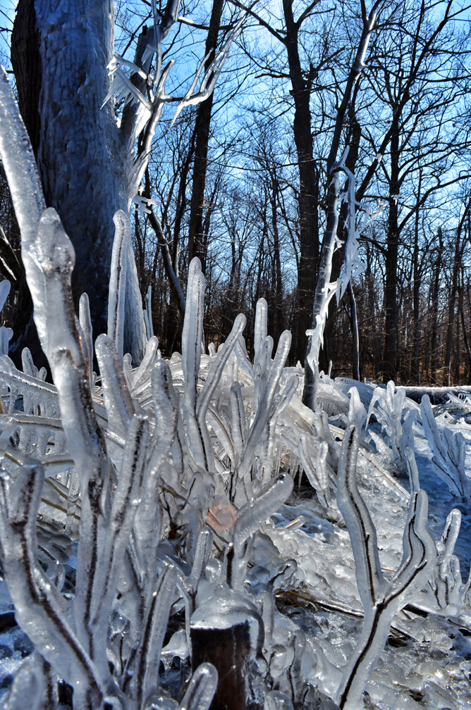 Frozen Sticks